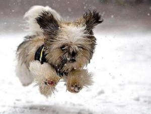 065 Doggy-Winter-Running